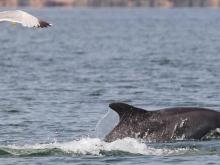 Escursioni in barca con avvistamento delfini